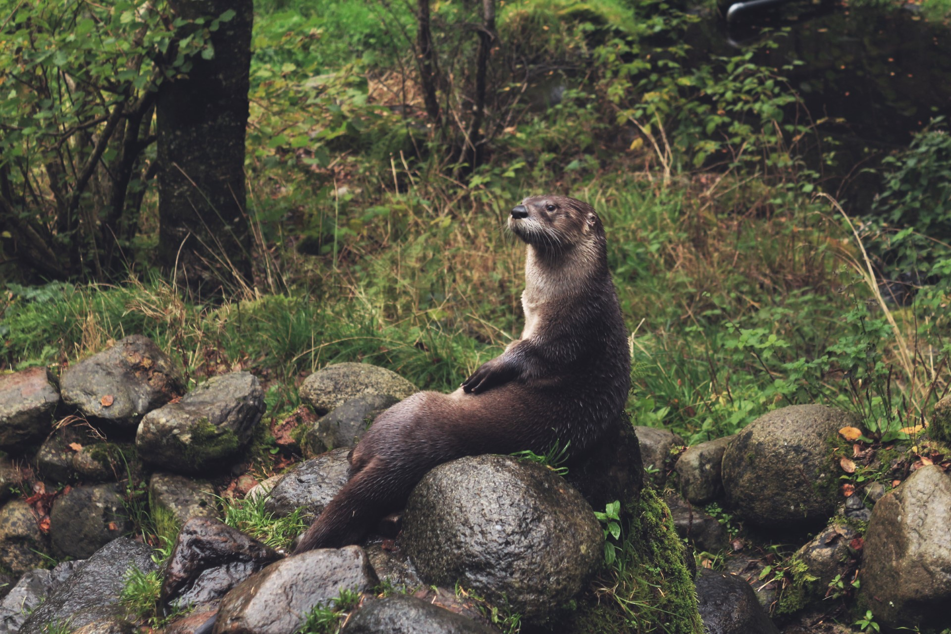 otter wales