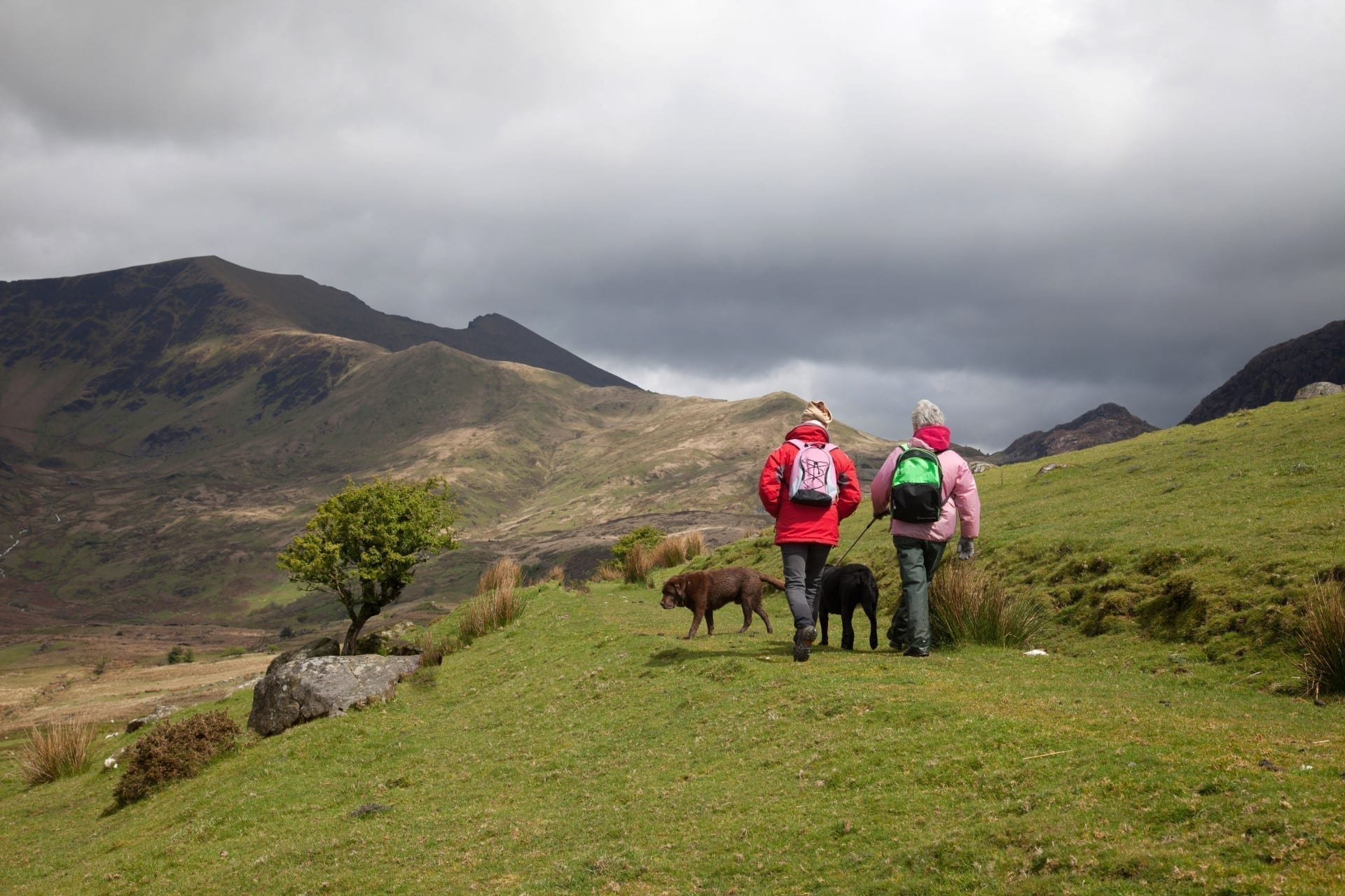 2 dog walkers on Conwy Mountain