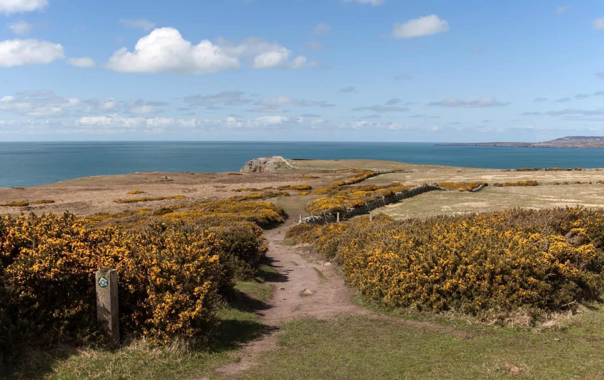 Rhoscolyn Headland Walk